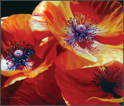 Poppies - Nance Danforth Paintings
