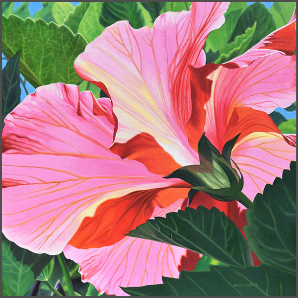 Sun Drenched Hibiscus - Nance Danforth Paintings