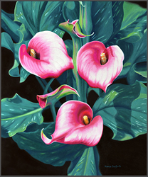 Calla Lilies - Nance Danforth Paintings