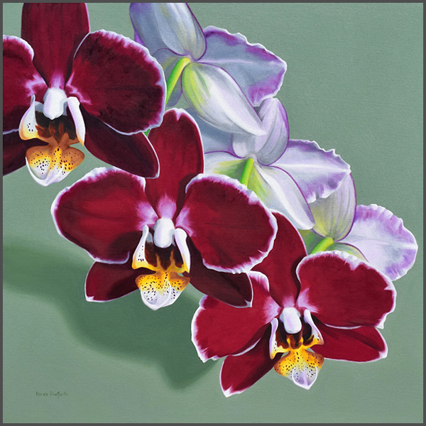 Orchids - Nance Danforth Paintings